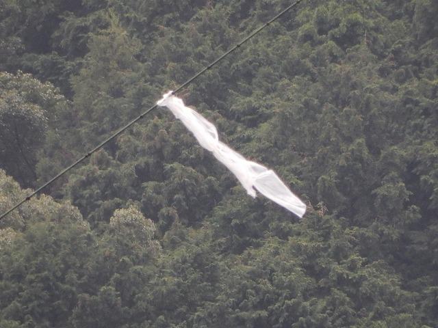 送電線に引っかかった飛来物